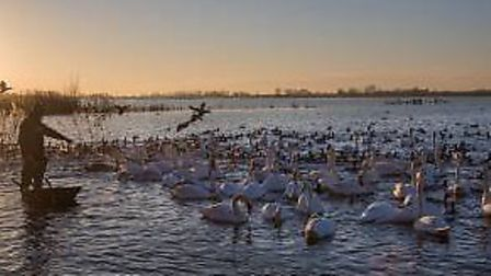 Feeding the swans at sunset. Picture: Sacha Dench