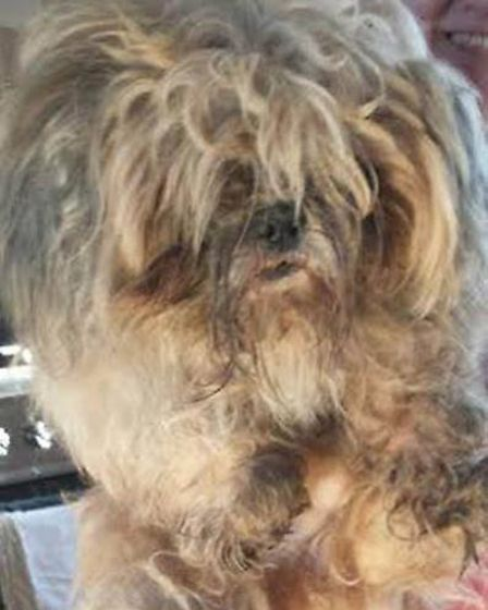 Ravenswood Pet Rescue take in matted dogs from London