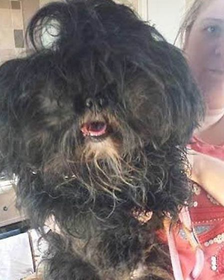 Ravenswood Pet Rescue take in two matted dogs from London