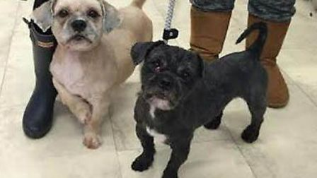 Ravenswood Pet Rescue - the dogs after they have been treated to a four hour grooming session