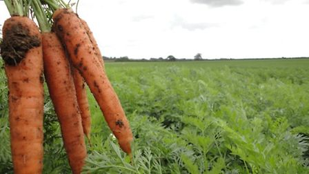 Organic veg has enjoyed a surge in sales over the Christmas period