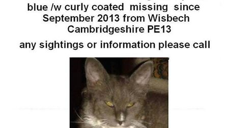 Missing Cat from Wisbech.