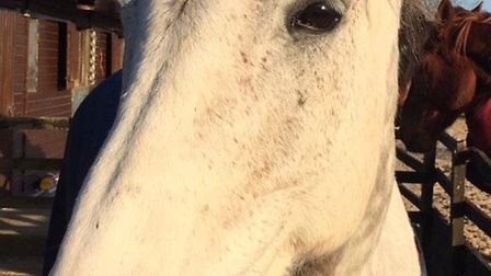 Monty the horse is recovering well after getting his foot stuck in a window.