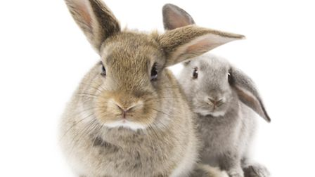 The rabbit population must be brought under control if Ely Country Park is to retain its status as o