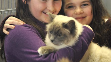 Ely & District Cats Protection League Annual Cat Show and Homing Day, at Little Downham Village Hall