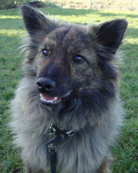 Cuif came from rescuers in Romania and is living in Wisbech with a foster carer while she waits for