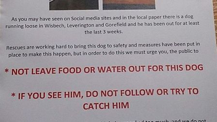 Poster appeal urges residents not to leave food out