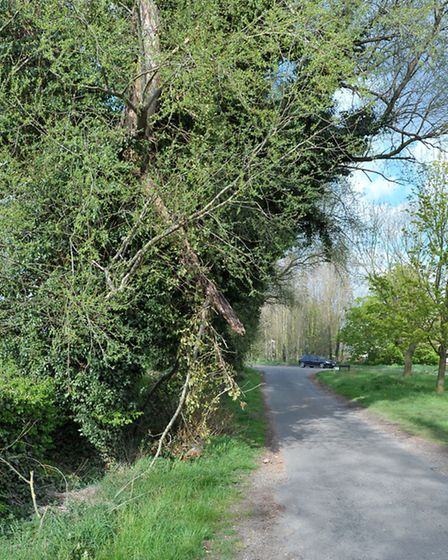 WSM Parish Council are very concerned about a number of trees on the verge of the highway in Plash D