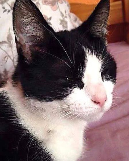 Black and white.Female missing since 13.2.15 Got into a removal van and escaped at Peartree Way Elm