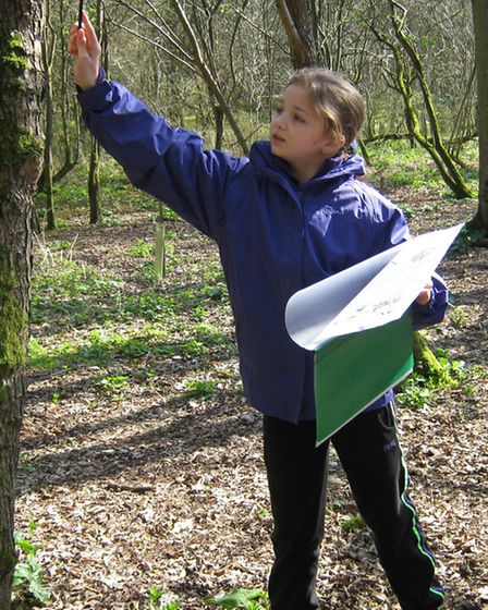 Brownies take part in a tree survey