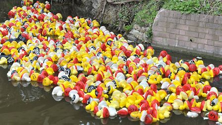 Whittlesey Mayor's charity Duck race.Picture: Steve Williams.