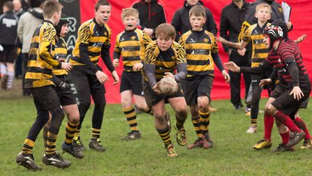 Ely Tigers Under12s in action.Pictures: Mark Johnson