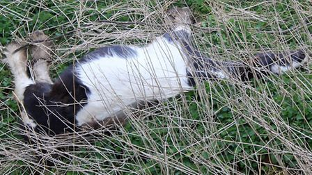 Dead horse found at Pophams Nr Upwell.