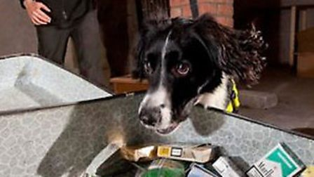 One of Wagtail's sniffer dogs in action