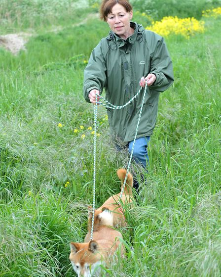 The public search for Goochie the blind and deaf dog at Thorney Dyke, Whittlesey. Picture: Steve Wil