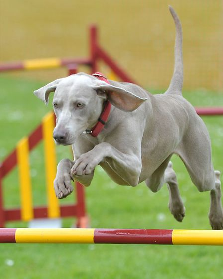 Coldham Dog Show. Picture: Steve Williams.