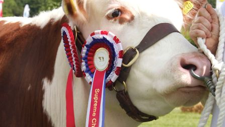 Cambs County Show