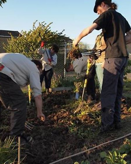 Ely Explorer Scouts hard at work on their allotment.
