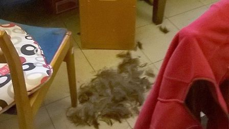 Hair left behind after the break-in at the British Heart Foundation in Wisbech.