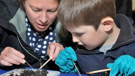 Ouse fest and fun day, mepal outdoor centre. Rebecca Crowe and Adam dissecting owl pellets. Picture: