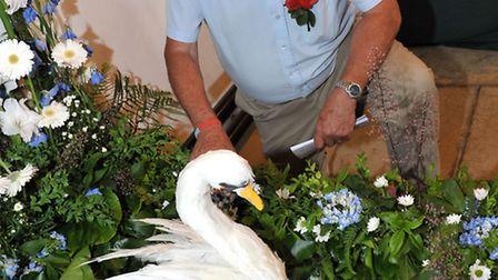 Wisbech Rose Fair, 2015. Trevor Wright with the white swan display in St Peter and St Paul Church.