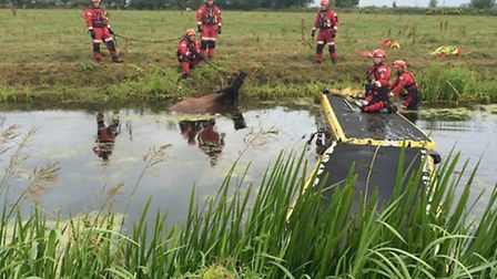 Firefighters rescued a horse from a water-filled dyke off East Delph, Whittlesey. Picture: CAMBS FIR