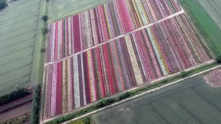 Roses from the air over the Fens ( PHOTO: Katie Denham, AAA Microlights, Chatteris Airfield)