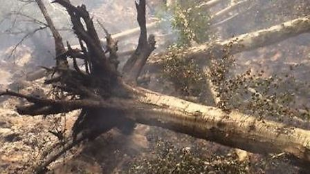 Fire causes trees to collapse and burn away at Holme Farm Nature Reserve