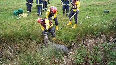 A horse is rescued from a ditch in Soham. Picture: Cambs Fire Facebook.