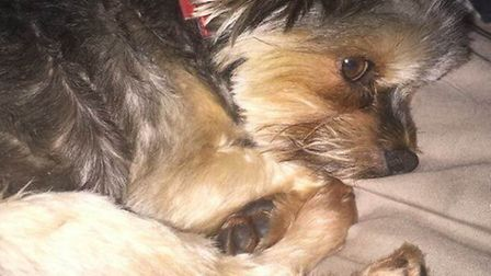 Ted the dog, who was killed by a car that did not stop at the scene on Tuesday (October 6)