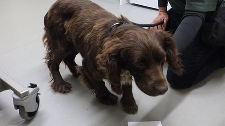 Cocker spaniel is dumped at a rubbish site. His companion, a terrier called Eva, had to be put down