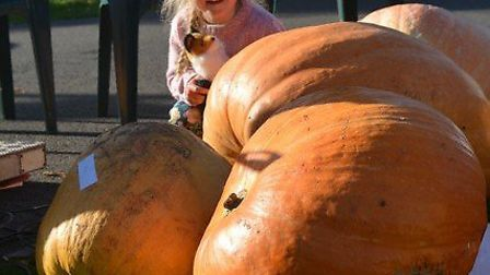 Some of the entries from Chatteris pumpkin and vegetable show