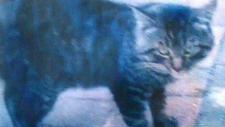 Plea to find missing cat from March