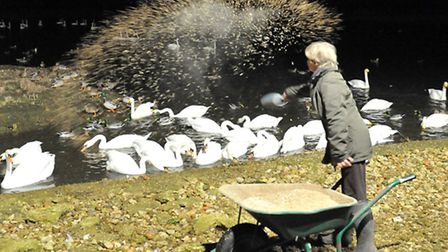 WWT Welney Wetland Centre celebrating the start of the swan season as these incredible birds make t