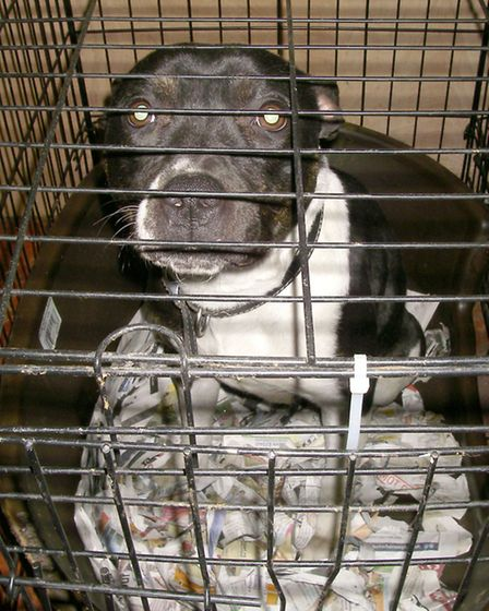 The RSPCA was called in late 2013 with concerns about the dogs.