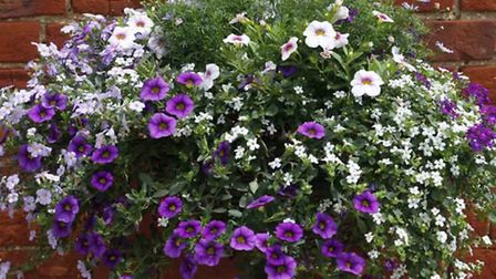Hanging basket grants look set to be scrapped in Soham and Ely