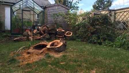 The tree stump where the unexploded hand grenade was found in the gardenof Christine Battersby in E