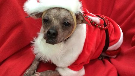 Pet hero of the year, Mugly from Peterborough
