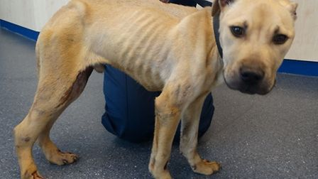 RSPCA appeal for witnesses after Alfie was dragged behind a car or thown from one