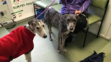 Harry and Kate are two of the most starved dogs taken in by Ravenswood Pet Rescue which has foster c