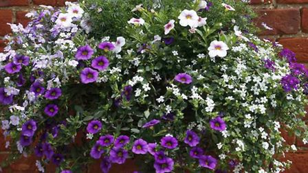 Hanging basket contract goes out to tender at Whittlesey