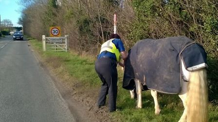 East Cambridgeshire PCSOs called to Fordham to deal with an escaped horse