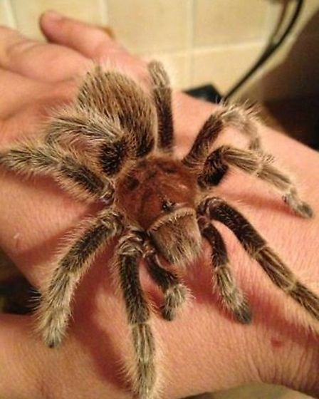 Phobia busting sessions with Exotic Animal Encounters