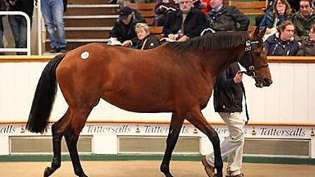 Doldrums at Tattersall's February Sale.