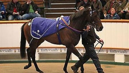 Soofiah at Tattersall's February Sale.