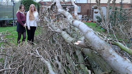 Georgia and Emily Cumbridge, who live on Estover Road, March, stand by the huge tree that came withi