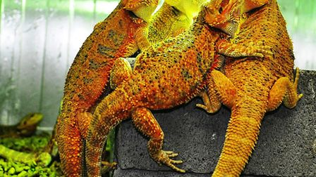 Monkfield Nutrition Insect and Reptile Farm