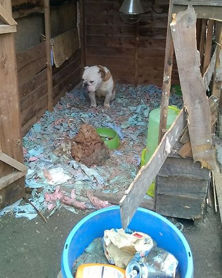 Police found this bulldog today in Beck Row. The RSPCA was called.