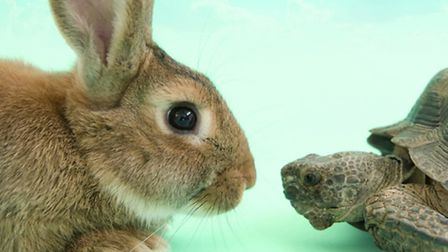 Tortoise and the Hare is coming to the Cambridge Corn Exchange