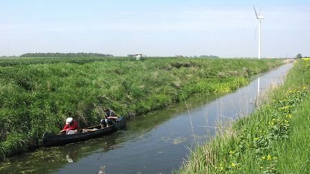 Water vole survey being carried out in the Fens